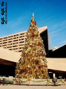 Photo of Christmas Tree in Nathan Phillips Square in Toronto. Photo credit ccvic.zenfolio.com